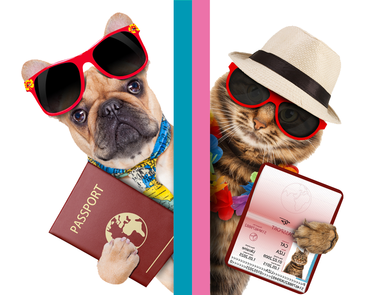Pet Passport Transparent